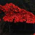 Photos: 公園の紅葉