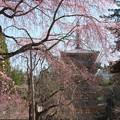 醍醐寺・伽藍(2)H29,4,3