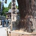 玉若酢命神社御霊会風流(9)八百杉(1)
