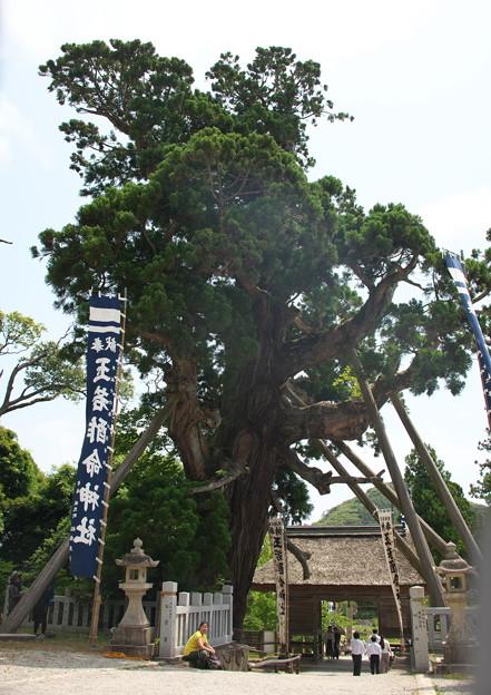 玉若酢命神社御霊会風流(10)八百杉(2)