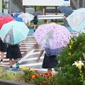 Photos: 雨の朝