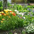 Photos: 自宅庭の花