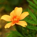 Photos: 自宅庭の花、私の名は?