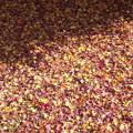 原田地区・都万目入口の紅葉 落ち葉のジュータン