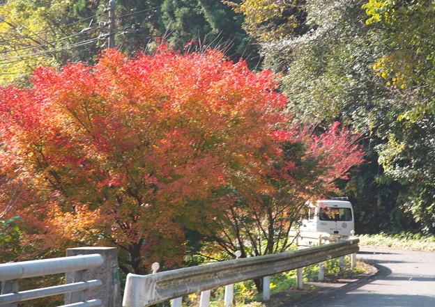 Photos: 原田地区・都万目入口、あこな橋から 都万目へ向かう。