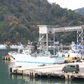 Photos: 八尾川河口・巾着網本船、港橋東詰めからの眺め