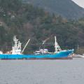 Photos: 隠岐島後・西郷港、松直し(23)第33運搬船 初詣で終了