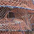 カニを獲る網籠、小カニ出口