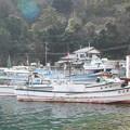 Photos: 西郷港の朝(31)愛宕山ふもとの眺め