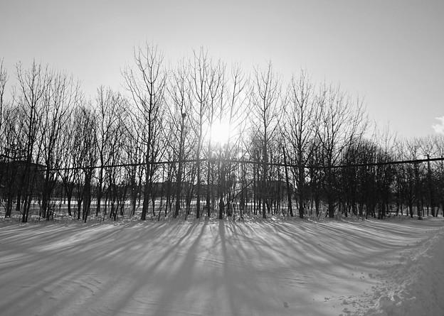 写真: 冬景色