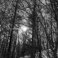 写真: 北大苫小牧研究林 7