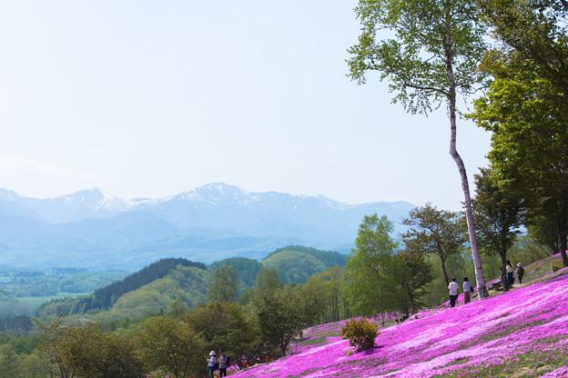 芝ざくら滝上公園6