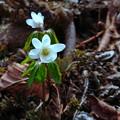 写真: 春の兆し?