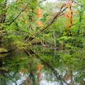 写真: そろそろ秋がくる