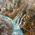 写真: 白ひげの滝1