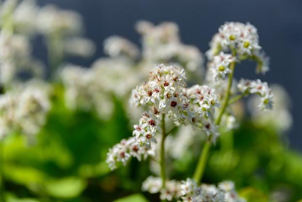Photos: 庭の花 20190519_3