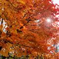 Photos: 紅葉_20201024_2