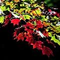 写真: ライトアップ紅葉