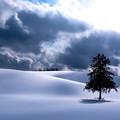 Photos: 名もない木