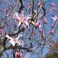 春が来た ③