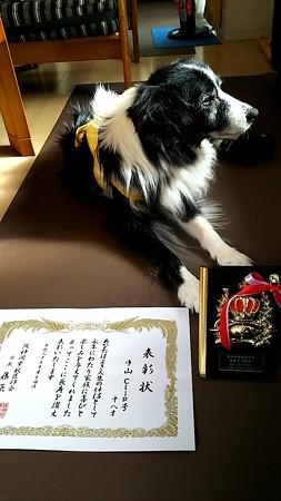Clip病院、薬と長寿犬表彰、三回目♪11