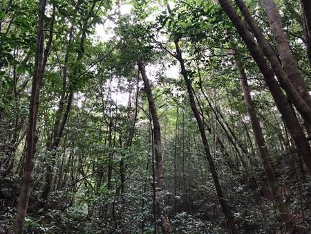 金作原と言う原生林に行きました