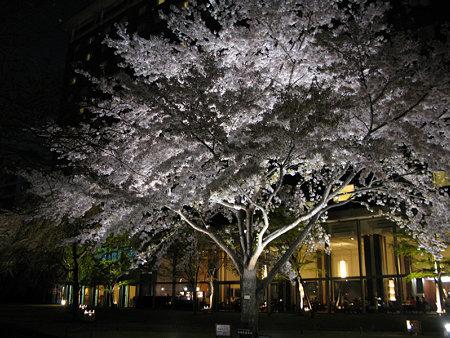 幻想的な夜桜に魅せられる!(4/7)