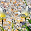 写真: 春が北の庭に