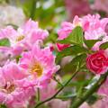 写真: 花園