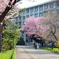 写真: エルムの春