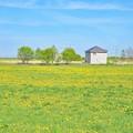 写真: 春が来たよ~