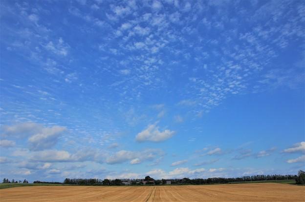 写真: 十勝平野(大空と大地)