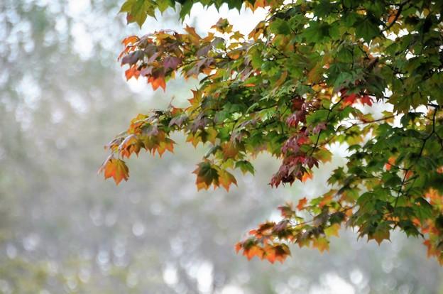 もう秋かー