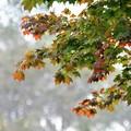 写真: もう秋かー
