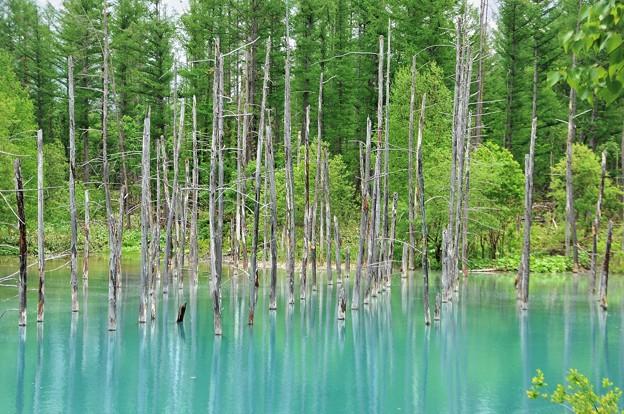5月の「青い池」