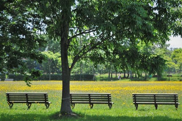 木影のベンチで