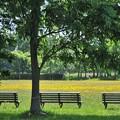 Photos: 木影のベンチで