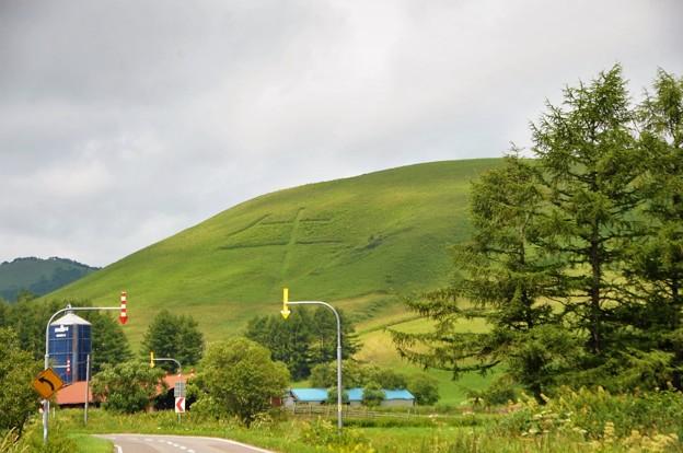 牛と云う名の牧場