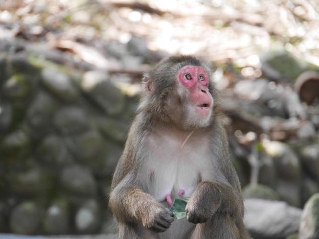 上を向いて~高崎山自然動物園