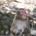 写真: 上を向いて~高崎山自然動物園