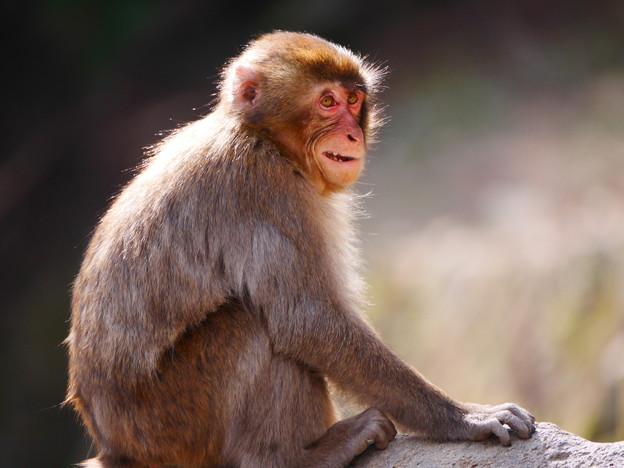 写真: 悪だくみ~高崎山自然動物園