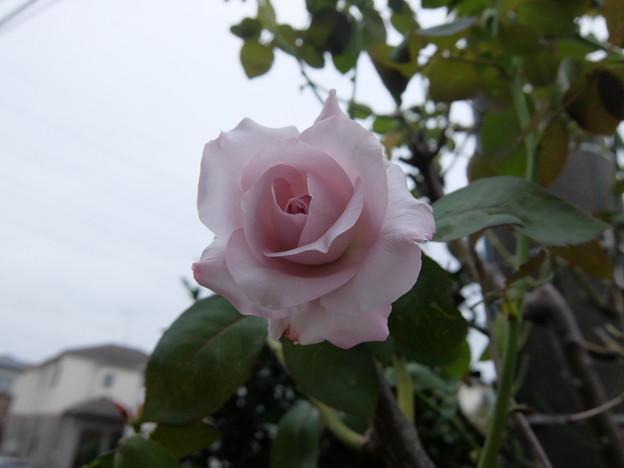 Photos: ブルームーン