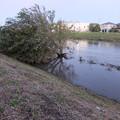 Photos: あの木が・・・