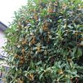 Photos: 秋の香りが・・・