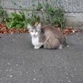 Photos: 子猫ちゃん