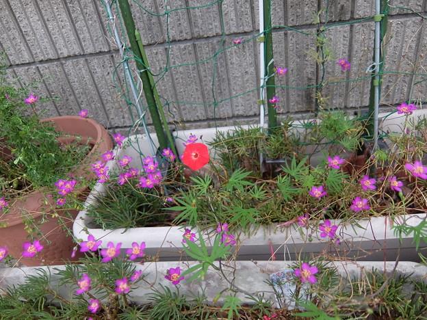 Photos: ピンクと赤
