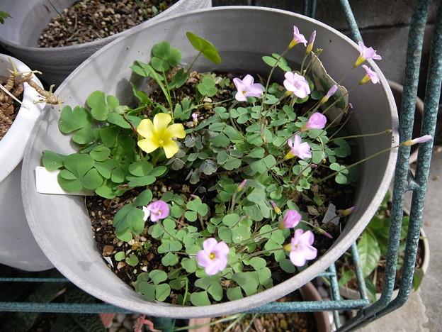 Photos: 侵入花