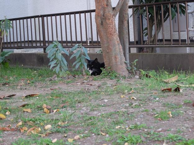 黒猫ちゃん見っけ~!!