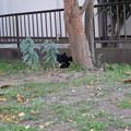 Photos: 黒猫ちゃん見っけ~!!