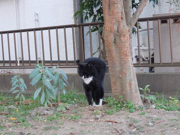 ネコのポーズ